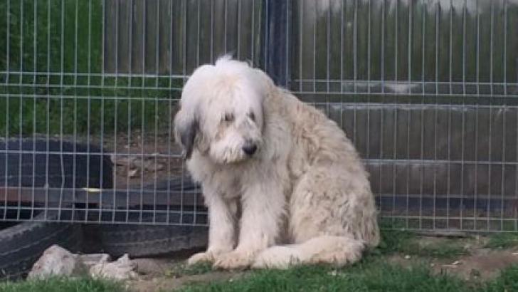 Hachiko de Dolj, câinele care, de 5 ani, stă lipit de gardul porţii şi îşi aşteaptă stăpânul mort