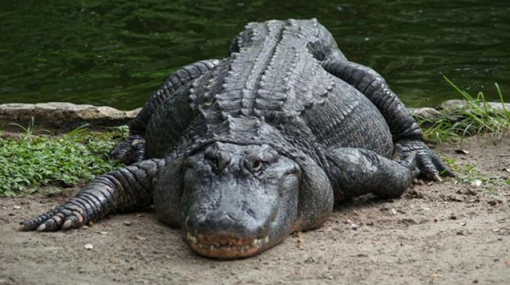 """""""Un crocodil m-a prins"""". Ultimele cuvinte ale unei femei, înainte să dispară sub apă. Ce a urmat"""