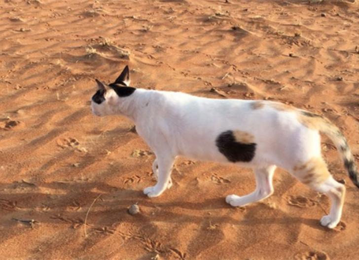 Pisica cu o gaură în burtă. Care-i adevărul din spatele acestei imagini care a viralizat Internetul