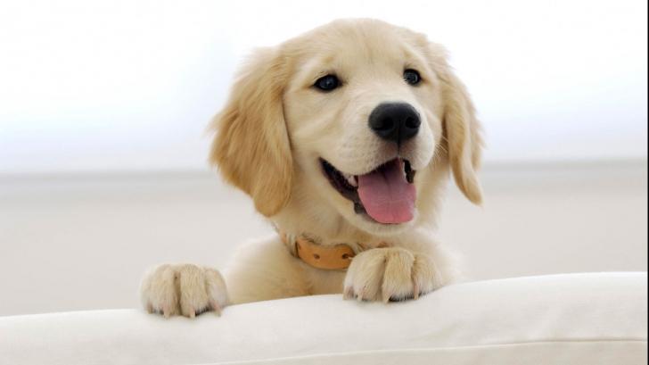 Greșeala pe care cei care au câini o fac frecvent. Pune în pericol viața patrupedului