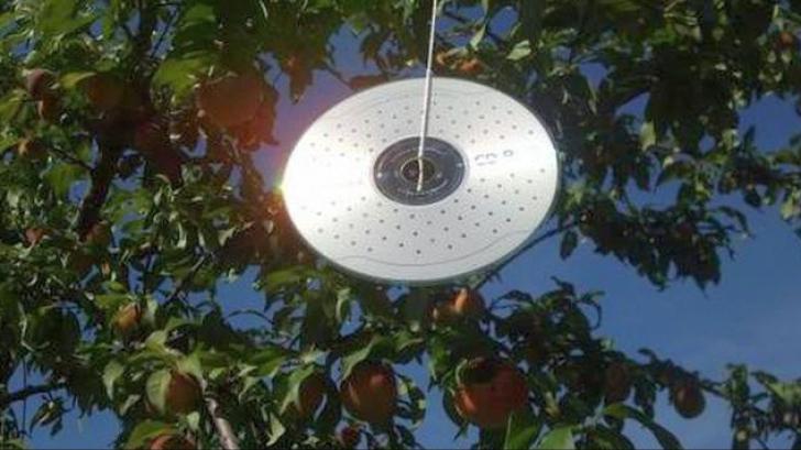 De ce să agăţi un CD la geam, vara? Nimeni nu bănuia că poate face asta