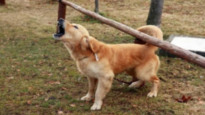 Cântăreaţă de muzică populară, desfigurată de un câine, într-un parc din Bucureşti