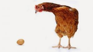 Oamenii de ştiinţă au găsit răspunsul la marea întrebare: Ce a fost mai întâi, oul sau găina?