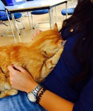 <p>Această pisică merge zi de zi la facultate. Studenţii nu-i mai dau drumul din braţe! Motivul?</p>