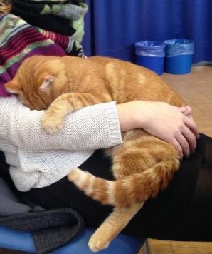 Această pisică merge zi de zi la facultate. Studenţii nu-i mai dau drumul din braţe! Motivul?