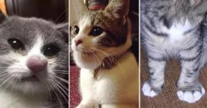 Fotografiile care au încins Internetul. Ce secret ascund pisicile din imagini? Ruşinos...