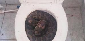 Surpriză înfiorătoare. Ce a găsit o femeie în vasul de TOALETĂ. A înghețat când a văzut. FOTO