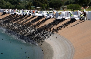 <p>Au aruncat milioane de mingi negre de plastic în apă. Motivul, halucinant!</p>