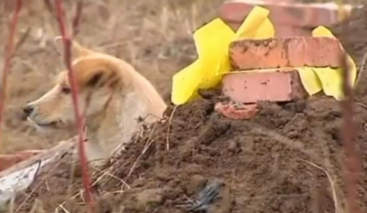 Cele mai emoționante povești despre câini și stăpânii lor! Nu o să-ți poți stăpâni lacrimile