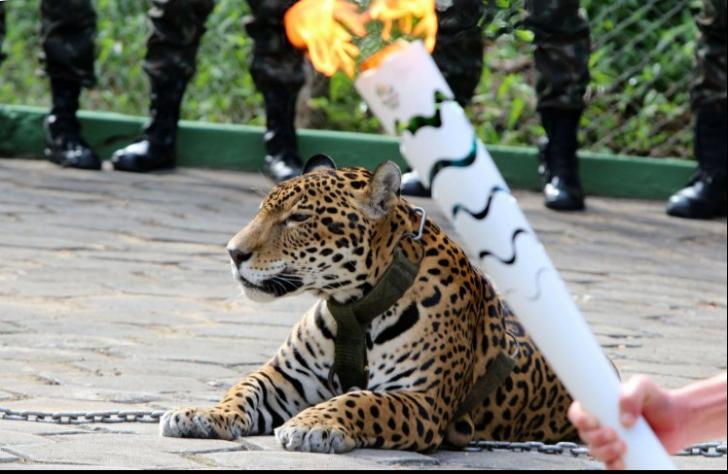 Scandal la Jocurile Olimpice 2016 de la Rio. Un jaguar a fost ucis