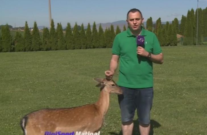 Păţania un reporter Digisport.A încercat să facă un live, dar i-a apărut în cadru un animal sălbatic