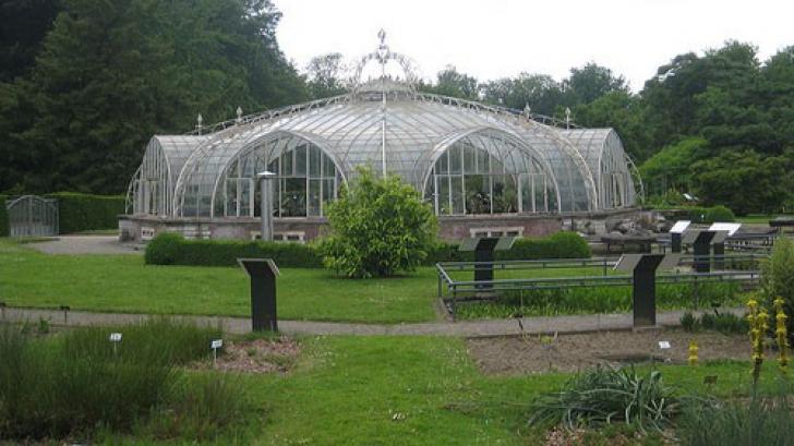 """Descoperire incredibilă într-o grădină botanică. """"Se întâmplă foarte rar!"""""""