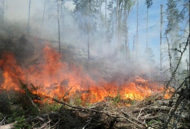Incendiu de vegetație de proporții în Cipru: 2 morți