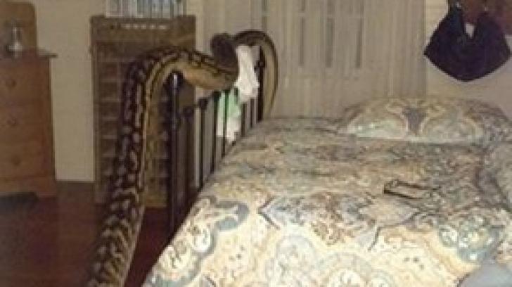 A deschis uşa dormitorului şi a îngheţat: avea cinci metri! Imaginile sunt ÎNFIORĂTOARE