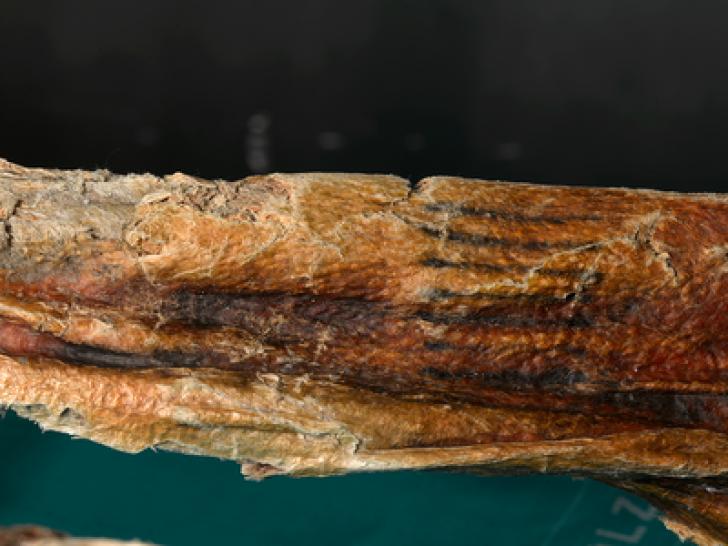 Cum arată cele mai VECHI tatuaje din lume. Au peste 5300 de ani. Află cui au aparținut