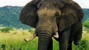 VIDEO ŞOCANT! O fetiţă de doar 7 ani a murit, după ce un elefant a aruncat o piatră în ea