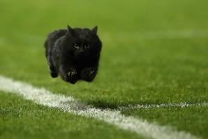 O pisică a întrerupt un meci de rugby. O nimica toată pe lângă ce a urmat!