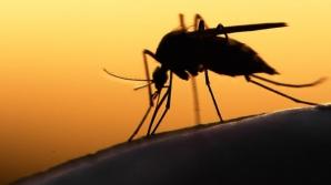 Cum îţi dai seama că ai fost infectat cu virusul ZIKA. Primele simptome