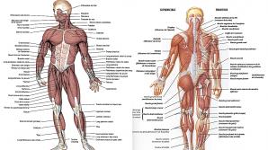 Subiecte BAC Anatomie 2016