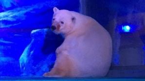 ''Cel mai trist urs polar din lume'', închis într-un mall din China. VIDEO