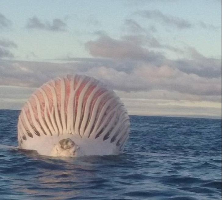 A văzut un balon în mijlocul mării. A ajuns la el și a încremenit! Ce era de fapt