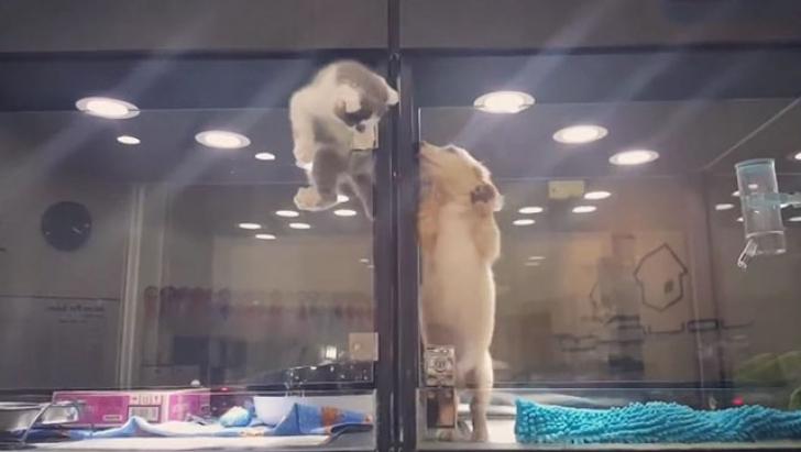 Atenţie, imagini cu impact emoţionat puternic! O pisică evadează dintr-o cuşcă şi...