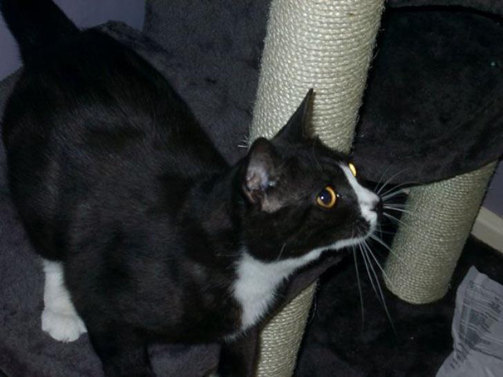 """Au găsit o pisică abandonată pe străzile din Paris. Ce au aflat despre ea i-a șocat. """"E imposibil"""""""