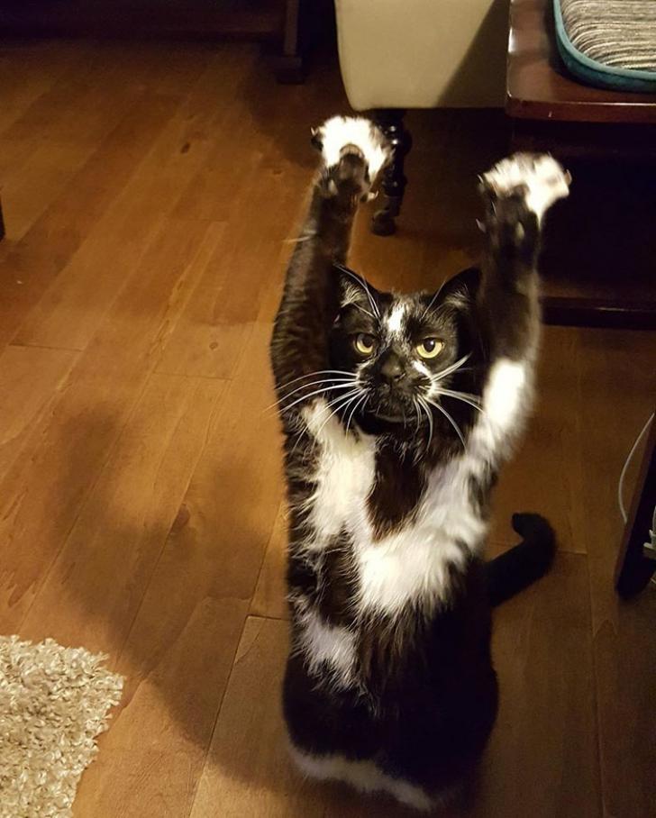 Aceasta este pisica momentului pe internet! Are un obicei bizar care a uimit pe toată lumea