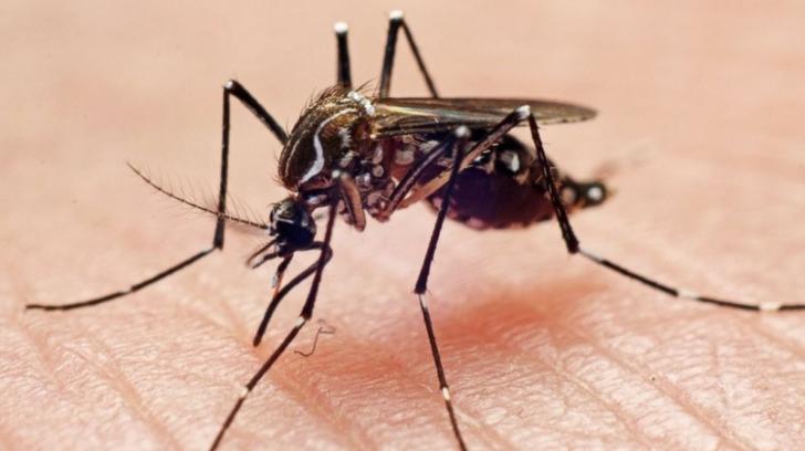 Cum să scapi de ţânţari cu ajutorul plantelor