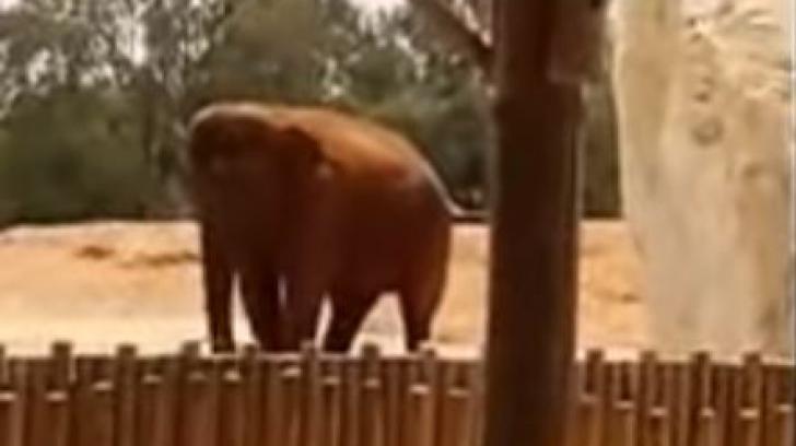 Accident extrem de BIZAR la gradina zoologica. Vizitatorii au avut un adevarat soc!