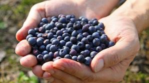 7 lucruri pe care nu le ştiai despre afine