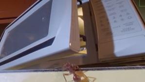 Ce se întâmplă dacă bagi o furnică într-un cuptor cu microunde! La asta chiar nu te aşteptai