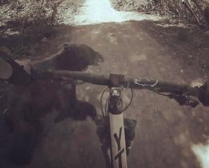 SPAIMĂ cumplită pentru un biciclist. Mergea cu viteză prin pădure când a izbit un ...
