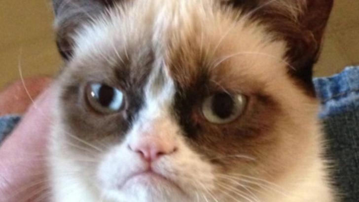 Fotografia de 500.000 de euro cu cea mai celebră pisică de pe internet