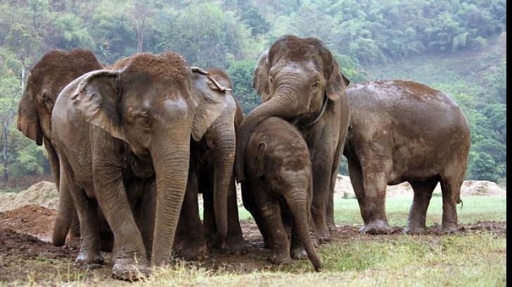 Țara în care elefanții ucid aproximativ 500 de oameni în fiecare an. Specialiștii trag un semnal de ALARMĂ