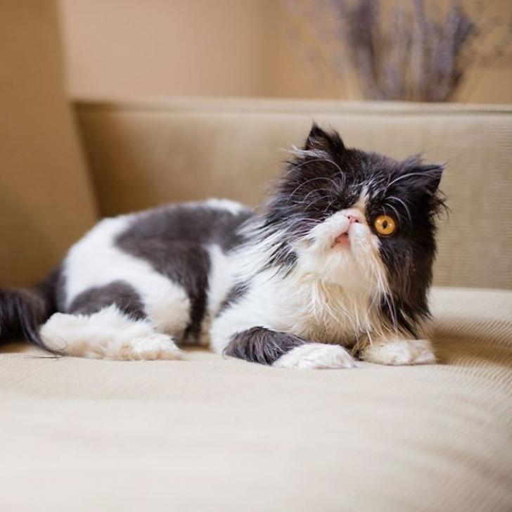 Ea este Spaghettio, o pisicuţă care şi-a pierdut un ochi, dar nu şi încrederea