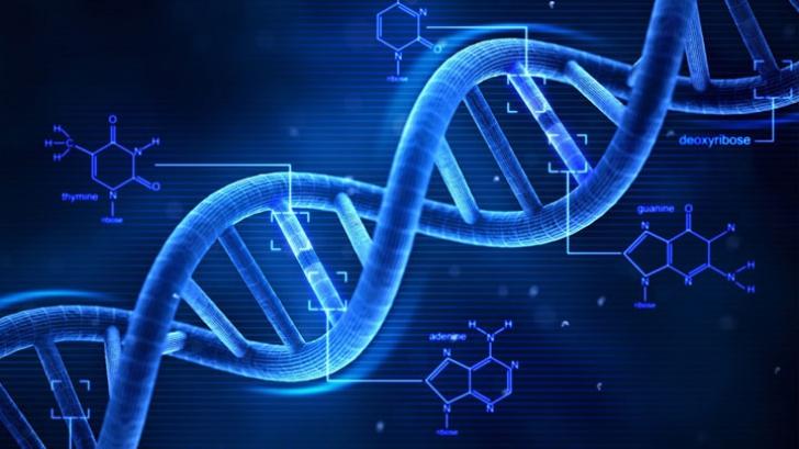 Mesaj de la Dumnezeu înscris în ADN. Cercetătorii au descrifrat misterele codului genetic uman