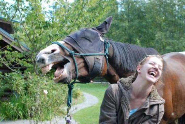 Top 10 cele mai amuzante imagini din lume. Te pufnește râsul