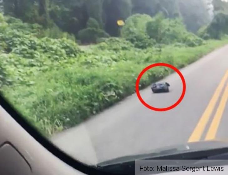 A văzut pe marginea drumului o pungă de gunoi care se mişca. Când a deschis-o, n-a mai zâmbit