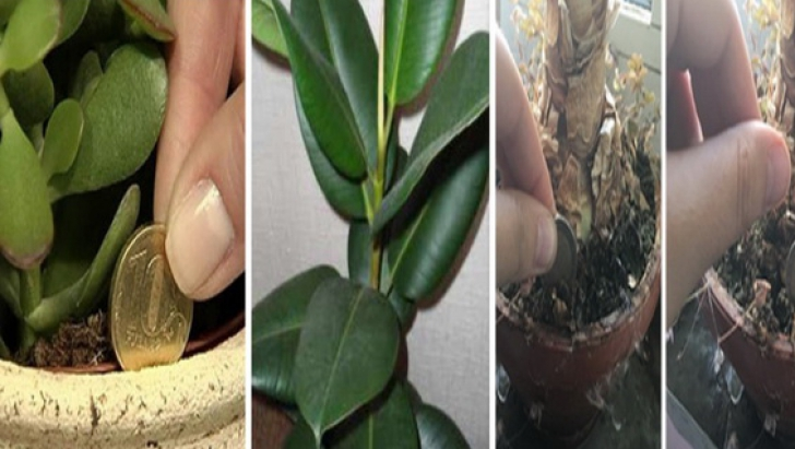 Ia-ţi una din aceste plante în casă pentru a avea noroc la BANI tot anul