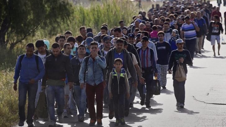 MAI, în alertă din cauza imigranților! Măsuri sporite de securitate la granița cu Serbia