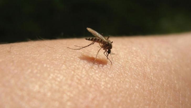 Cum scapi RAPID de mâncărimea provocată de înţepăturile ţânţarilor