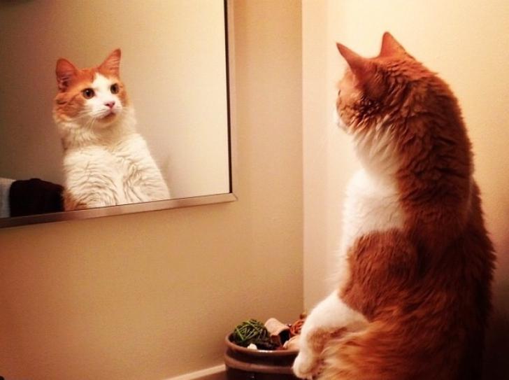 Este uimitor! Iată ce văd animalele atunci când se privesc în oglindă
