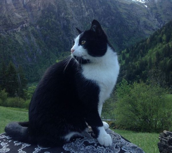 Pisica elveţiană care a uimit lumea: l-a ajutat pe un turist rătăcit să coboare de pe munte