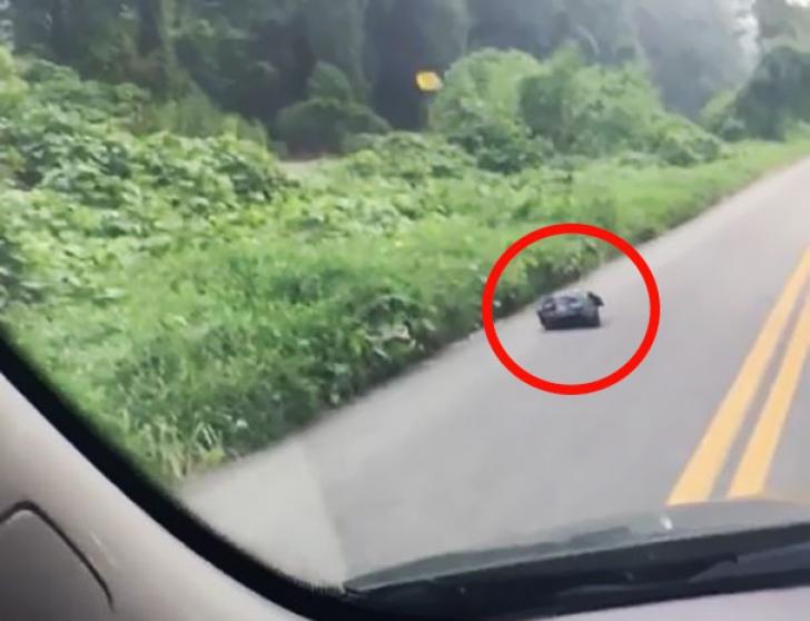 A găsit pe şosea un sac de plastic, iar când l-a deschis a suferit un şoc! Ce se afla înăuntru?