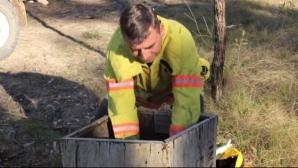 Un pompier a găsit o cutie în pădure. Ce a găsit în interior i-a schimbat complet viaţa