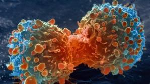 Această plantă tratează cancerul în 40 de zile. Cum trebuie folosită