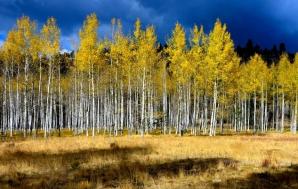 Povestea fabuloasă din spatele acestei imagini! Tu câţi copaci vezi în poză?