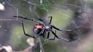 """Cel mai ghinionist bărbat din lume! Înţepat de două ori de un păianjen, într-o zonă... """"ascunsă"""""""