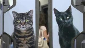 INVAZIE de pisici la metroul din Londra. Oamenii au rămas uimiţi Cum se poate aşa ceva?